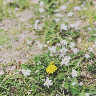 花のある生活をおすすめ!疲れも癒される。今やサブスクに枯れない花も。