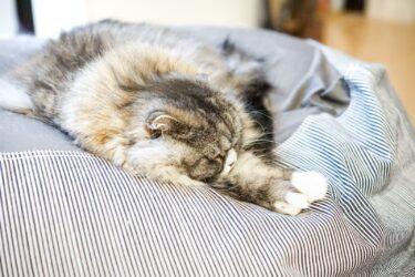 心身ともに元気な為に安眠睡眠大事なわけ
